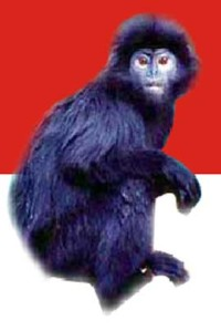 lutung